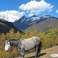 海子溝--白雲駿馬與四座姑娘山.jpg