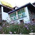 東谷盆景-開滿波斯菊的藏族人家.jpg