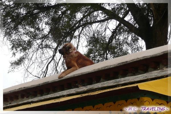 羅布林卡-屋頂上的獒犬(3.jpg