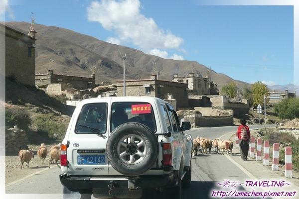 開始走S307-遇到村莊,等待羊群過馬路.jpg