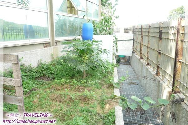 在公司的一角落開闢成菜園.jpg