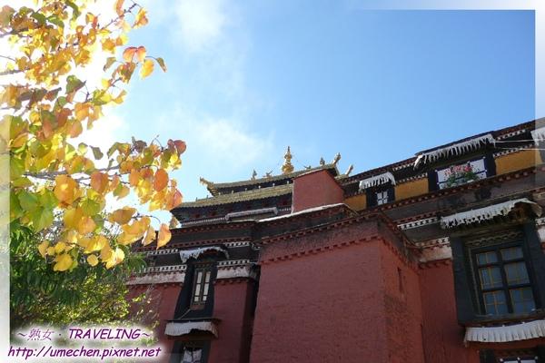 札什倫布寺-四世班禪靈塔祈殿-金色的秋葉襯著藏紅的塔殿,很靜.jpg