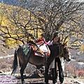 往洛絨牛場-過了農同壩一路上都是騎馬的哦.jpg