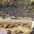 洛絨牛場-小小村(1)一般至牛場住宿或露營在此.jpg