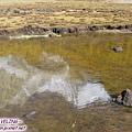 洛絨牛場-夏諾多吉峰的水中倒影.jpg