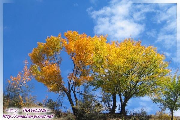 赤土河風光-豔黃的秋色.jpg