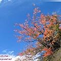 赤土河風光-粉紅的秋色.jpg