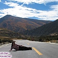 杜鵑山谷至稻城沿路玩(4)躺在馬路都沒車,哈.jpg