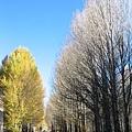 前往稻城-白楊樹林的光影進行曲4.jpg