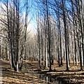 前往稻城-白楊樹林的光影進行曲12.jpg