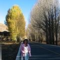 前往稻城-白楊樹林的光影進行曲6.jpg
