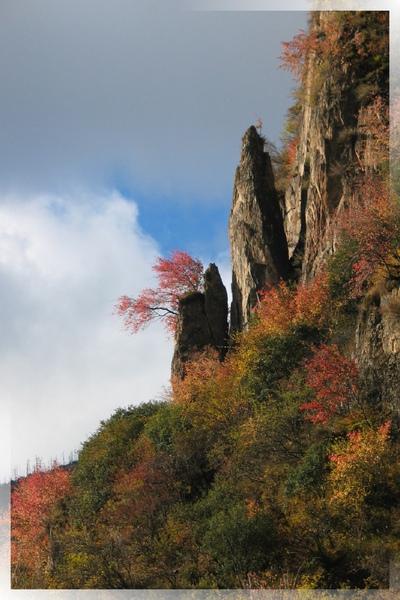 國道318-崖上粉紅的秋色.jpg