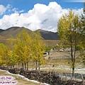 前進新都橋-這村寨的圍牆都是用樹幹樹枝做的,加上柏楊殘霜,美吧.jpg