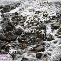折多山-冰雪的異想世界(8)枝葉的溪流都像泡了牛奶浴.jpg