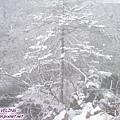 木格措-正飄雪的銀白(10).jpg