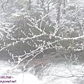 木格措-正飄雪的銀白(13).jpg