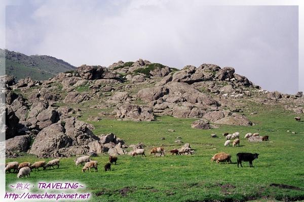 62-岩石草原上的羊群.jpg