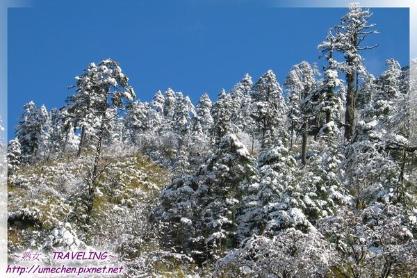 磨榆公路-山坡樹林雪景(2).jpg