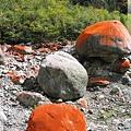 前往磨西鎮-紅石灘(1)比S303公路丹巴至八美段的紅石還火紅.jpg