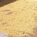 磨西鎮-路旁曬玉米粒.jpg