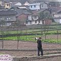 大渡河畔的村鎮(3.jpg