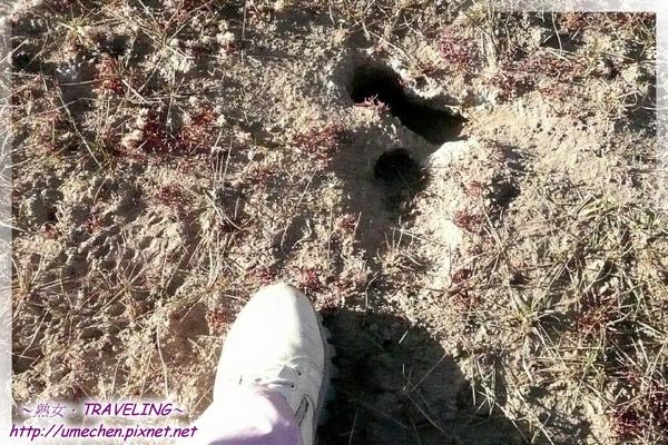 初見馬泉河-沙漠鼠的地穴.jpg