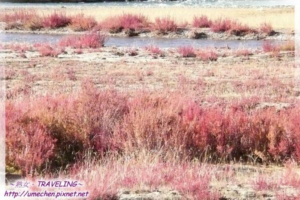 馬泉河-紅草灘-15.jpg