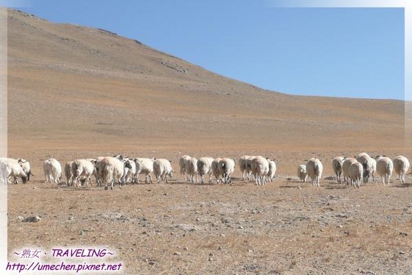 遇見牧羊女-羊羊得意-4.jpg