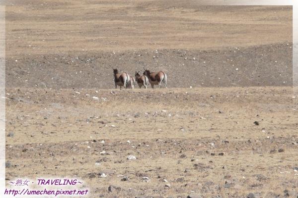 又見藏野驢-1.jpg