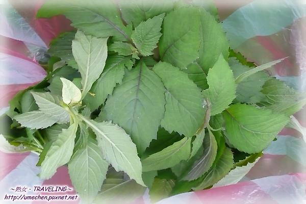 採野菜-山茼蒿.jpg
