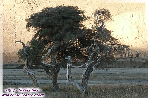 丁丁卡牧場-就這樣只長了3株樹,真特別.jpg