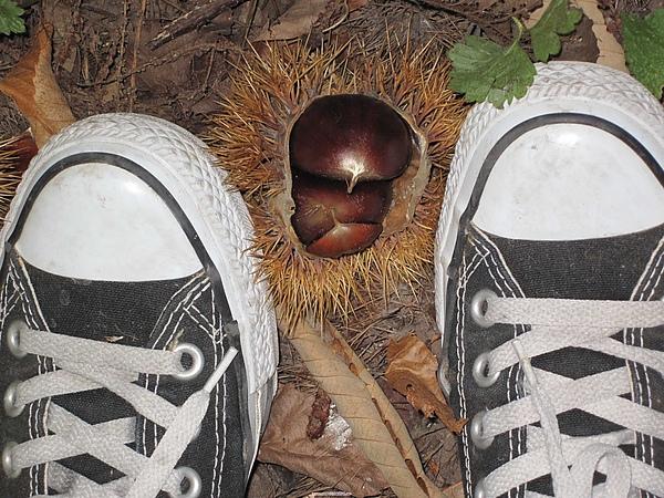 Chestnuts & Converse