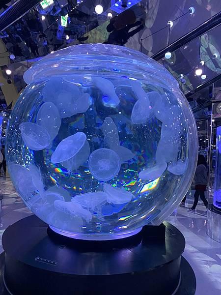 2021-02-21水族館_210303_5.jpg