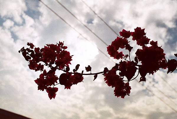 Photo21_19A.jpg
