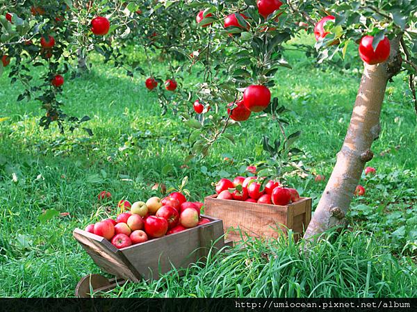 蘋果定律農夫