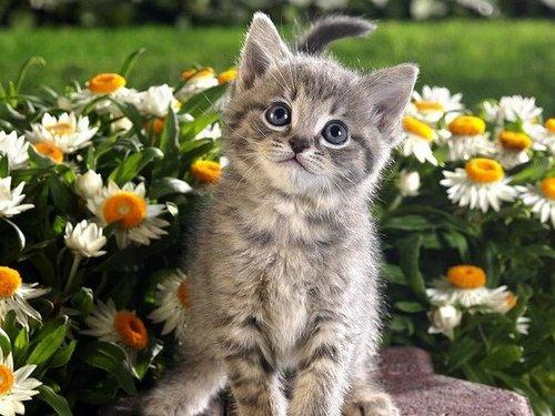虎斑貓的分享.jpg