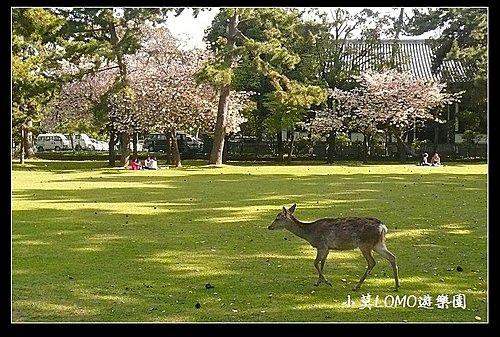 2009京都行(番外篇)_Dear 奈良の鹿  (1).jpg