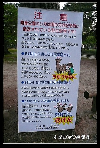 2009京都行(番外篇)_Dear 奈良の鹿  (2).jpg