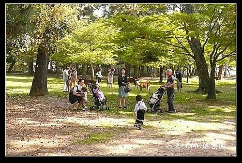 2009京都行(番外篇)_Dear 奈良の鹿  (3).jpg