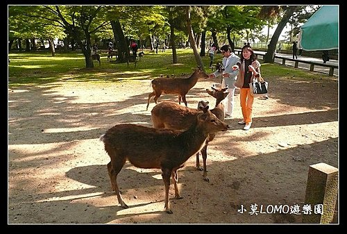 2009京都行(番外篇)_Dear 奈良の鹿  (4).jpg