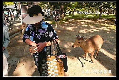 2009京都行(番外篇)_Dear 奈良の鹿  (6).jpg