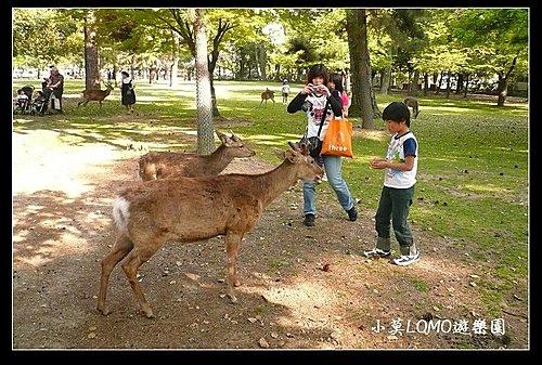 2009京都行(番外篇)_Dear 奈良の鹿  (7).jpg