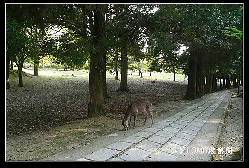 2009京都行(番外篇)_Dear 奈良の鹿  (12).jpg