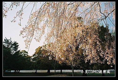 2009京都行(番外篇)_Dear 奈良の鹿  (14).jpg