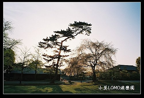 2009京都行(番外篇)_Dear 奈良の鹿  (15).jpg