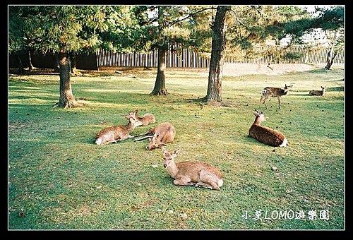 2009京都行(番外篇)_Dear 奈良の鹿  (16).jpg