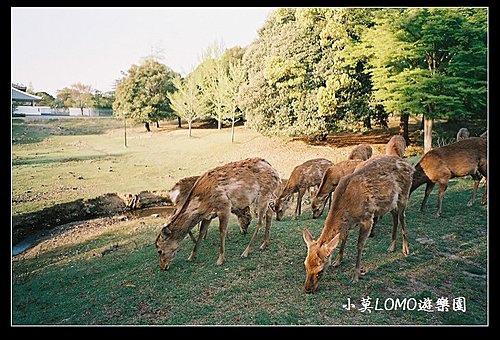 2009京都行(番外篇)_Dear 奈良の鹿  (17).jpg