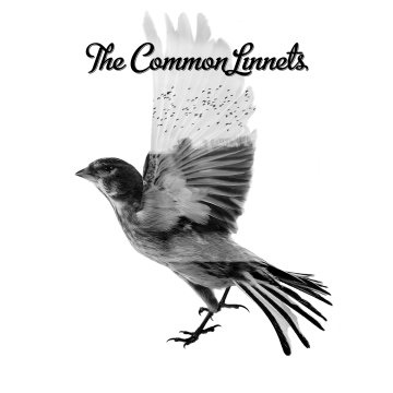 The Common Linnets.jpg