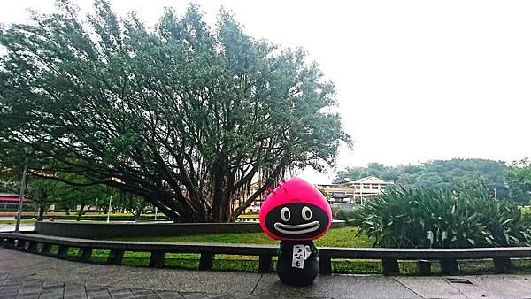 ㉓鰻寶樹背景.jpg
