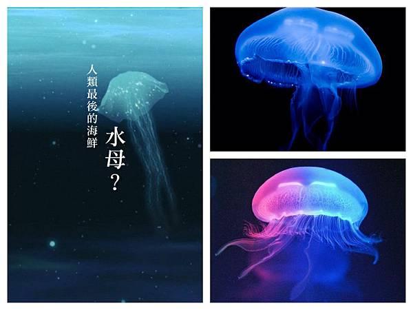 水母concept